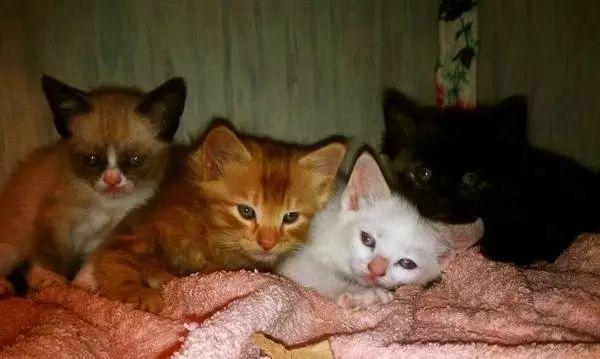Image result for tartar sauce cat