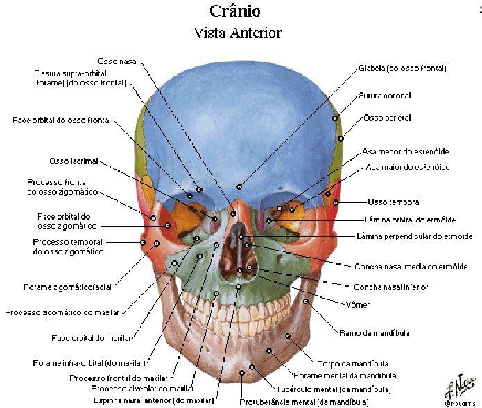 Atlas de Anatomia Humana - Netter (português).pdf