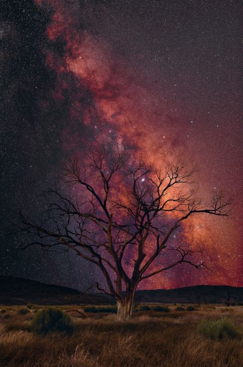 opticculture:   The Milky Way is one of the most beautiful and...