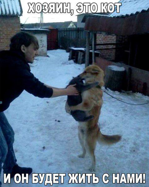 Фото приколы с собаками и щенками животные, прикол, собаки