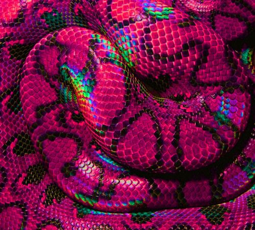 Best 25+ Colorful Snakes Ideas On Pinterest