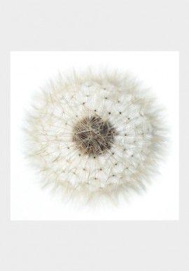 """Photo - """"Dandelion"""" by Fabio Zonta BUY IT NOW ON www.dezzy.it!"""