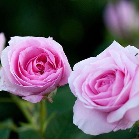29 best un jour, une fleur images on pinterest | flowers, gardens