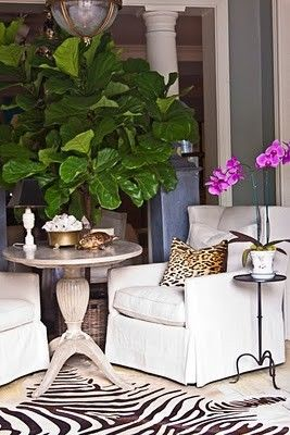 Fiddle leaf fig tree and just the colors of the room (& leopard makes me smile).