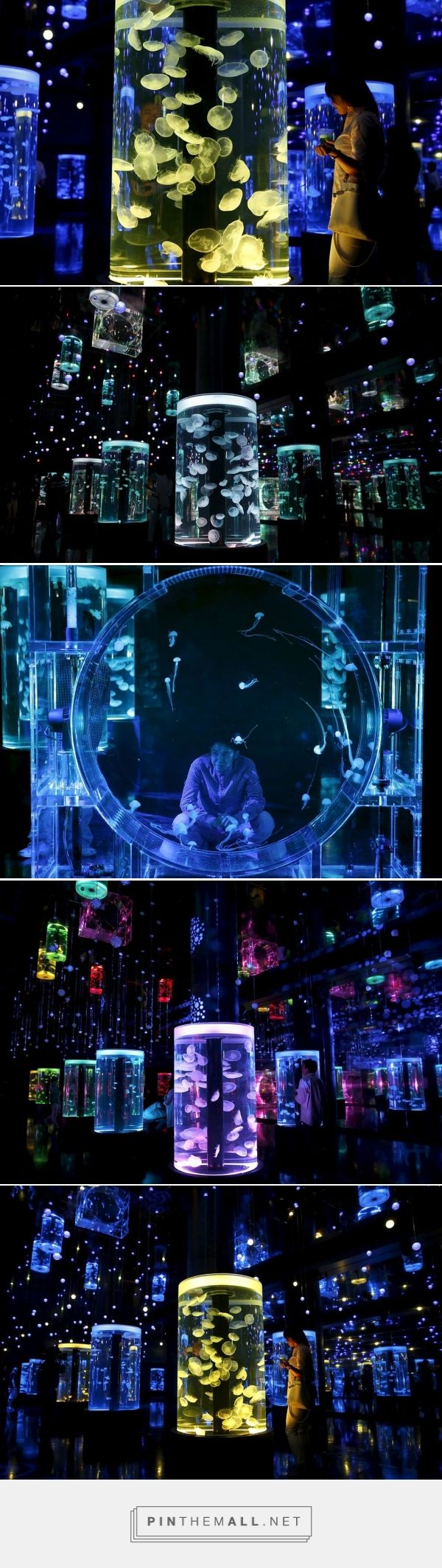 Epson Aqua Park Shinagawa Aquarium's Re-opening in Tokyo... - a grouped images picture - Pin Them All