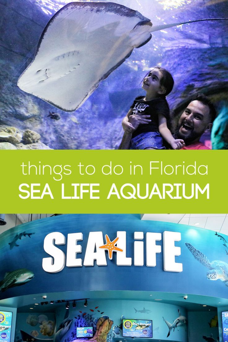 Things To Do In Florida Series Sea Life Aquarium Attractions