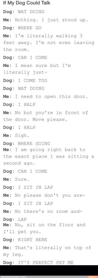 Dog chat