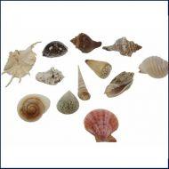 Prachtige schelpen groot & klein