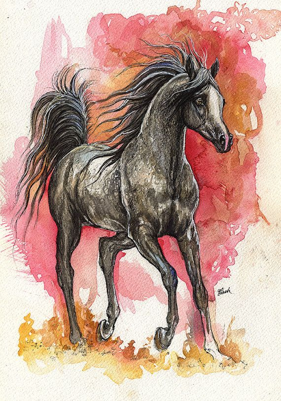 Grey arabian horse equine art equestrian horse potrait for Immagini di cavalli da colorare