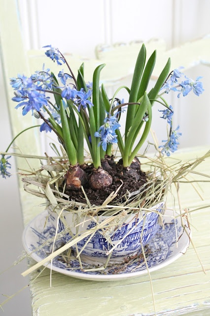 bulbs in blue and white