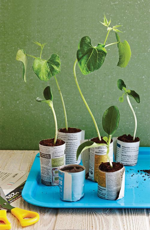 DIY garden starter tubes.  Also good are t.p. and paper towel tubes.  I like this better because the plants can push open the paper tubes.