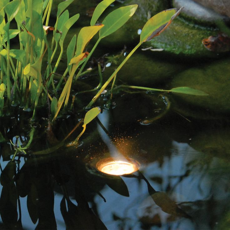 25 Best Ideas About Pond Lights On Pinterest Pond Waterfall Water Features For Garden And