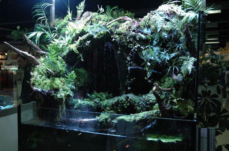 アクアテラリウム専門店 PLANTSTON プランツトン