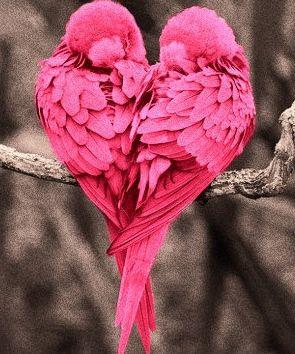 Birds in pink!