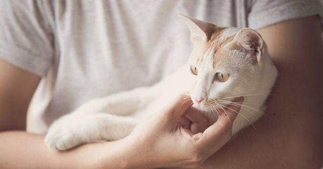 Nos conseils pour bien s'occuper d'un chat âgé  chat âgé La vieillesse chez le chat n'est pas forcément synonyme de tracas ! Si son corps et son comportement changent petit à petit, il ne tient qu'à vous de lui offrir une retraite sereine et paisible.