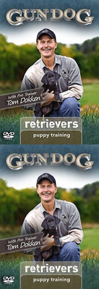 Training Videos and Books 116387: Gun Dog Puppy Training: Retrievers Dvd -> BUY IT NOW ONLY: $117.67 on eBay!