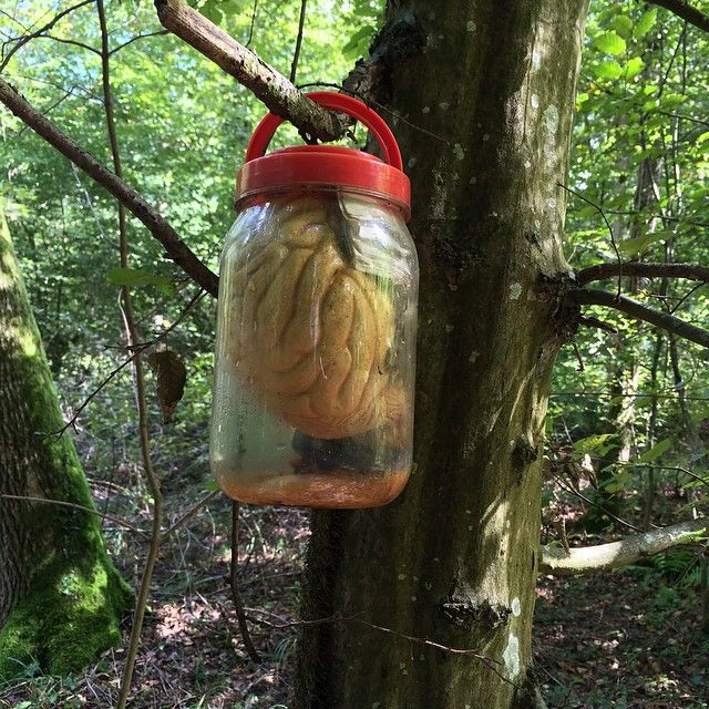 Hmmm... A brain hanging in a tree in the woods. Must be a #geocache for zombies. :) (pinned from websta to Creative Geocache Containers - pinterest.com/islandbuttons/creative-geocache-containers/)