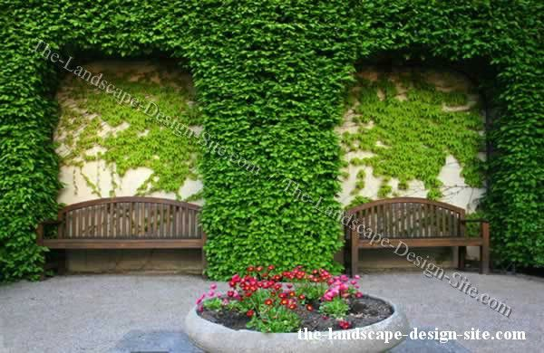 Climbing Vines And Plants On Courtyard Walls Outdoors
