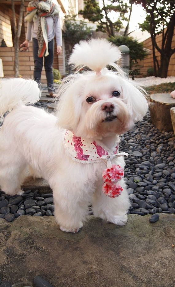 Small dog puppy pom pom bandana Reversible Peter Pan collar pet bandana butterflies glitter heart lace effect & broderie anglaise (extra S)