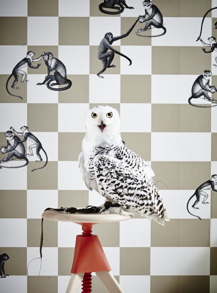 Trend: Into the Wild wallpaper #ColeandSon via #BartBrugman