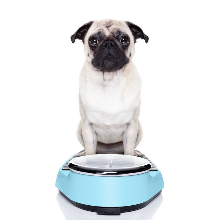 If your dog is not eating their food, there may be a number of reasons why.  Find out about Canine Anorexia and Common Causes for Inappetence.