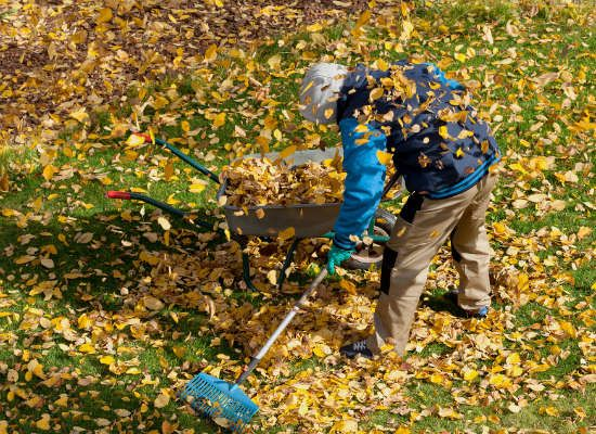 There are a few vital things you can do each fall for a better looking lawn next spring. Here's a roundup of some of the most essential yard maintenance tasks to do now.