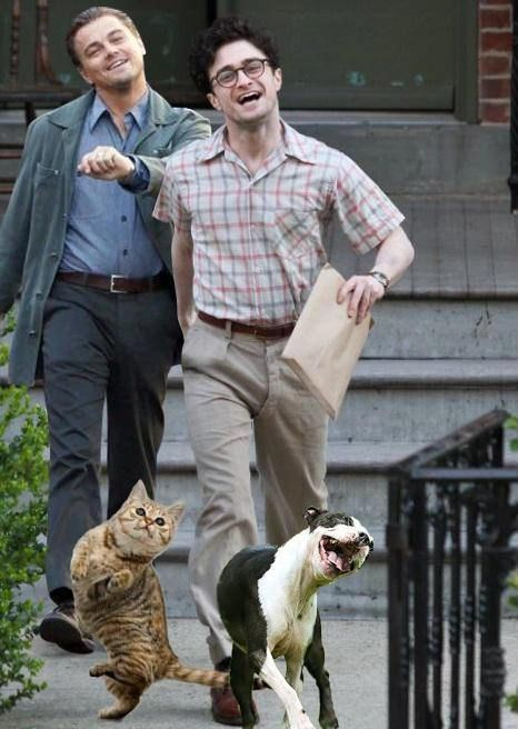 Leonardo DiCaprio walking with Daniel Radcliffe and their pets