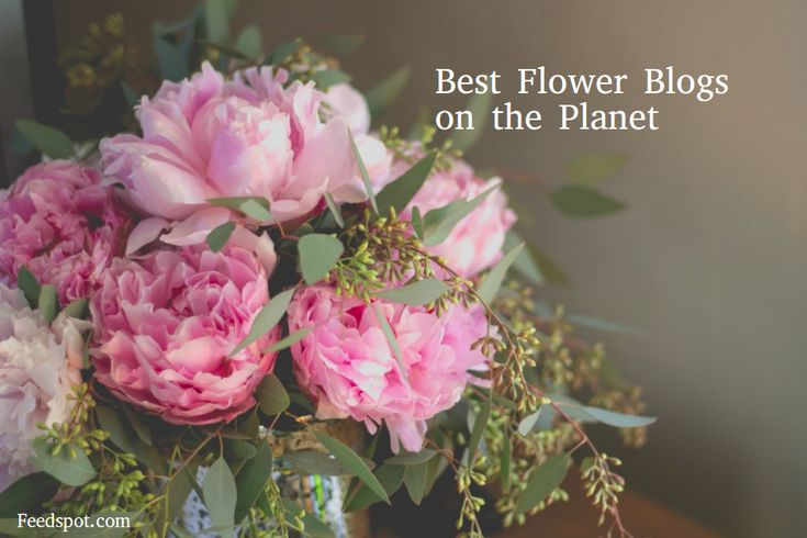 Top 100 Flower blogsFlower Blogs ListThe Best Flower blogs from thousands of top Flower blogs in our index using search and social metrics. Data will be refreshed once a week.If your blog is selected in this list, you have the honour of displaying this Badge (Award) on your...