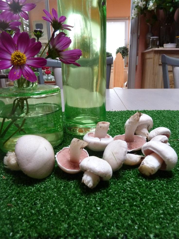 champignons rosés des prés - www.passionpotager.canalblog.com