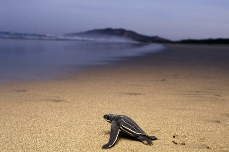 I plan to help the baby Sea turtles to the water on my next trip to CR