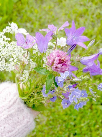 Kuu yrttitarhassa: Kukkaruokaa- kukkaketo keittiössä. Syötäviä kukkia, osa I