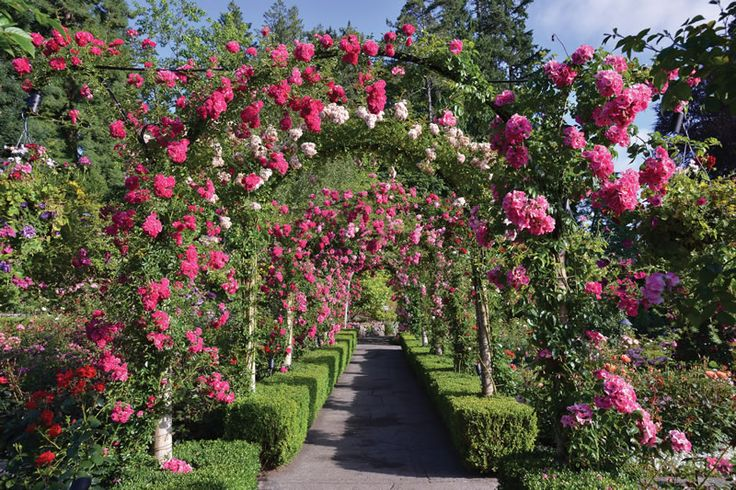 The Rose Garden ,The Butchart Gardens