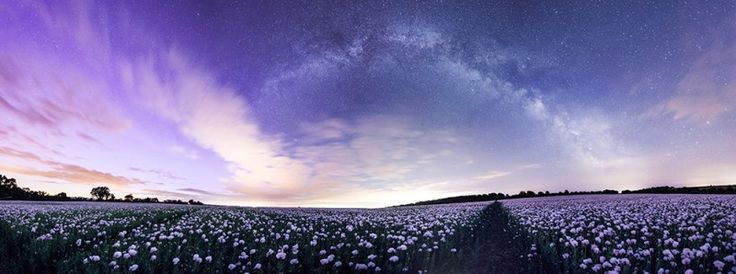 Northen lights seen over Dorset poppies with Andromeda Galaxy and the Milky Way