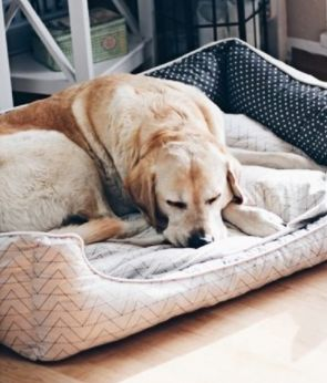 Sew dog bed itself – pattern and sewing instructions via Makerist.de