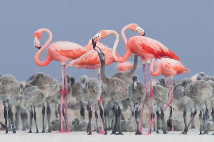 Tajemnicza sowa, gibki flaming i spółka - Inspirowani Naturą | British Trust for Ornithology awards | flamingo