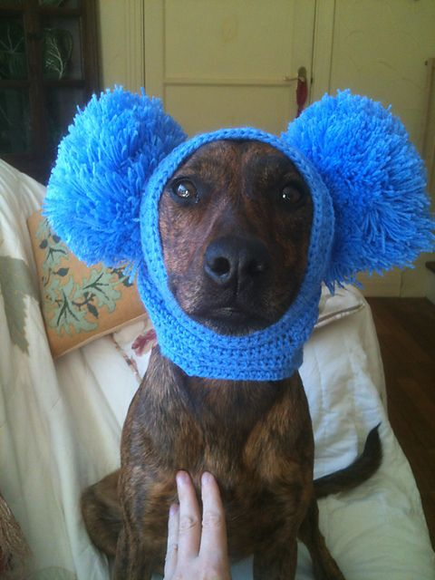 How To Make Dog Ear Warmers For Dogs