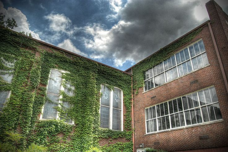 Ivy on Wrather Hall on the campus of Murray State University.: Photo