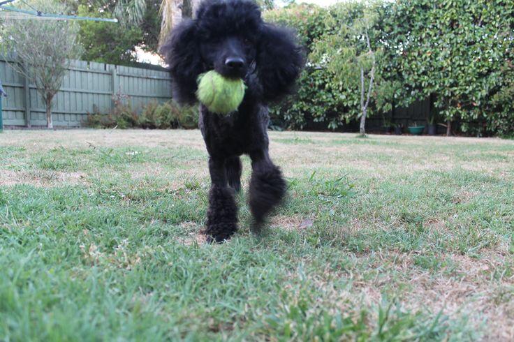 Louis favourite toy