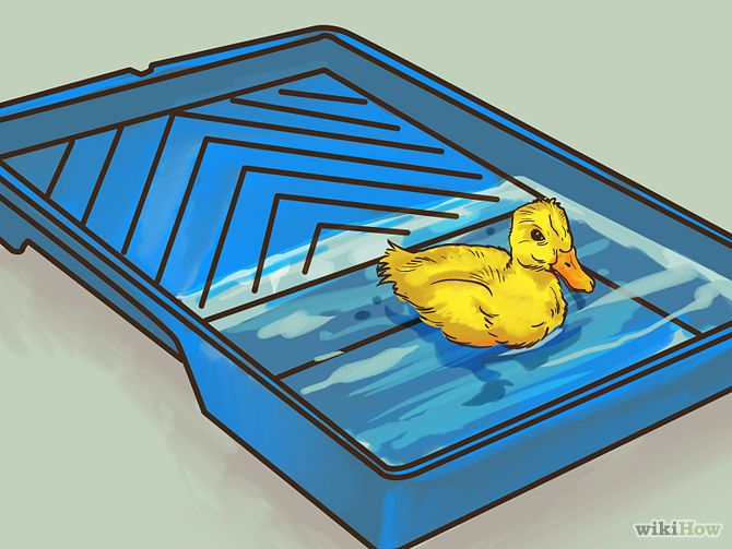Take Care of Ducklings - use a paint tray for early swimming lessons!