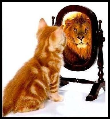 Are you the kitten of limitations or are you the Lion of potential? How you see yourself determines the level of success you achieve!