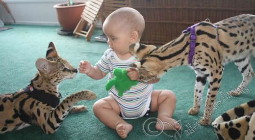 Is it edible? Serval Pinterest Serval, Animal and Cat