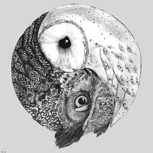 Yin yang of life and owl