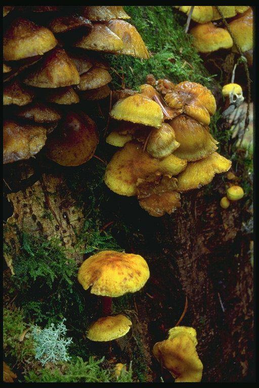 forest floor images | Musgos y hongos parásitos en un tronco de árbol [] > Planta Forestal ...