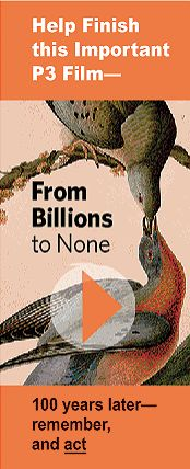 From Billions to None - Passenger Pigeon Project