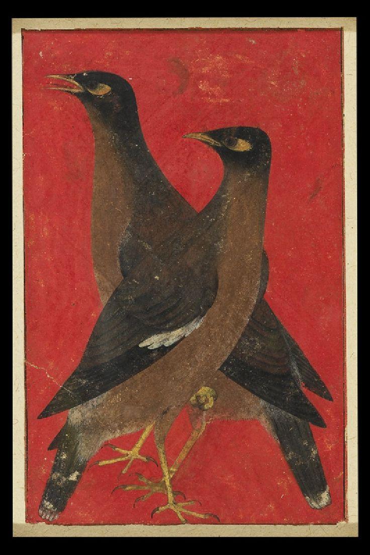 Two Myna Birds -- Circa 1620 -- Mughal, North India -- Via the Ashmolean Museum, Oxford, England.