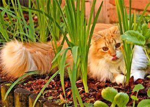 les matous au jardin potager