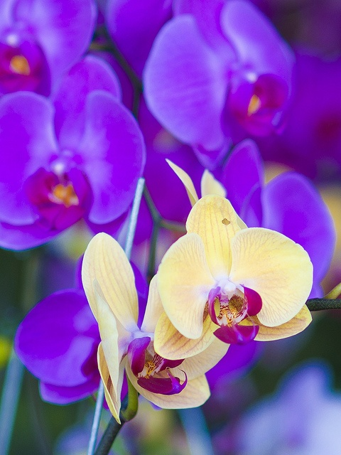 yellow and purple...one of my FAVORITE color combinations <3