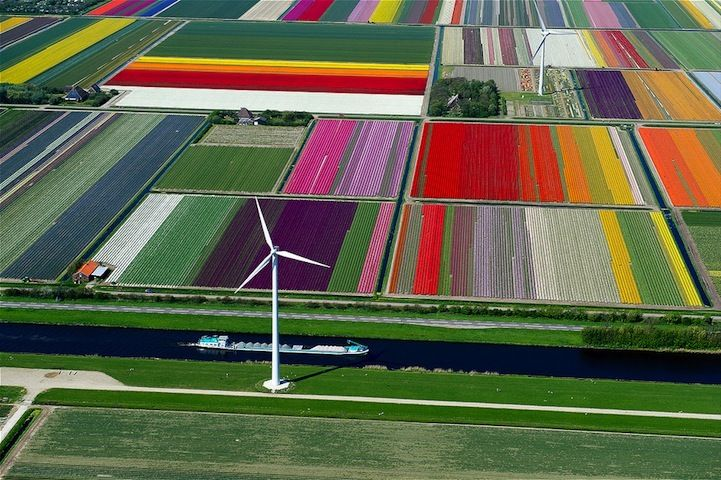 Campos de Tulipas na Holanda!: Tulip Fields, Flowers Fields, Wind Turbine, Color, Farms, Holland, The Netherlands, Aerial Photography, Places