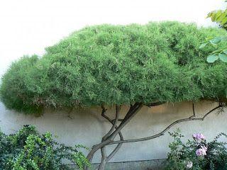 Garden KaRo: Niwaki sztuka japońska w polskim ogródku