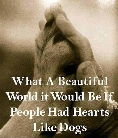 Beautiful Sayings for Dogs   What a beautiful world it would be if people had hearts like dogs ...